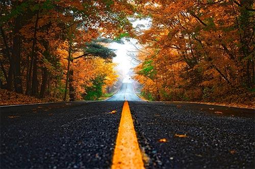fall-road-sm